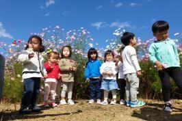 가을단감농원 작은 코스모스 축제