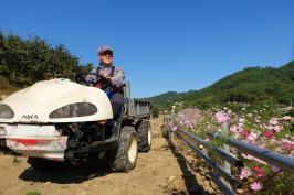 가을단감농원 수확준비 모두 마쳤습니다.