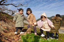 가을단감농원 시껄 벅쩍 합니다.