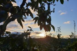 가을단감농원 아침 그립 입니다.